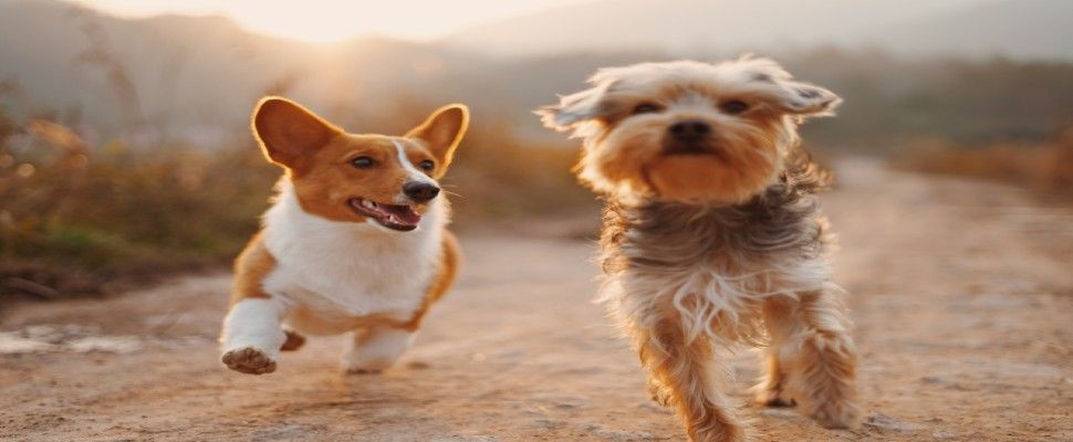 Pet-friendly holiday places on the Gold Coast