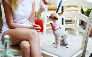 41 Pawfect Dog-Friendly Café's & Bars