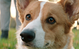 Win Tickets to 'A Dog's Purpose'