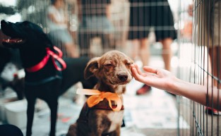 Places You Can Adopt a Pet in Brisbane