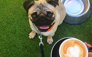 Best Dog Friendly Cafes