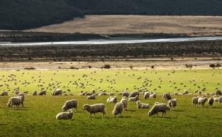The Dreamy 2021 New Zealand Travel Hit-List