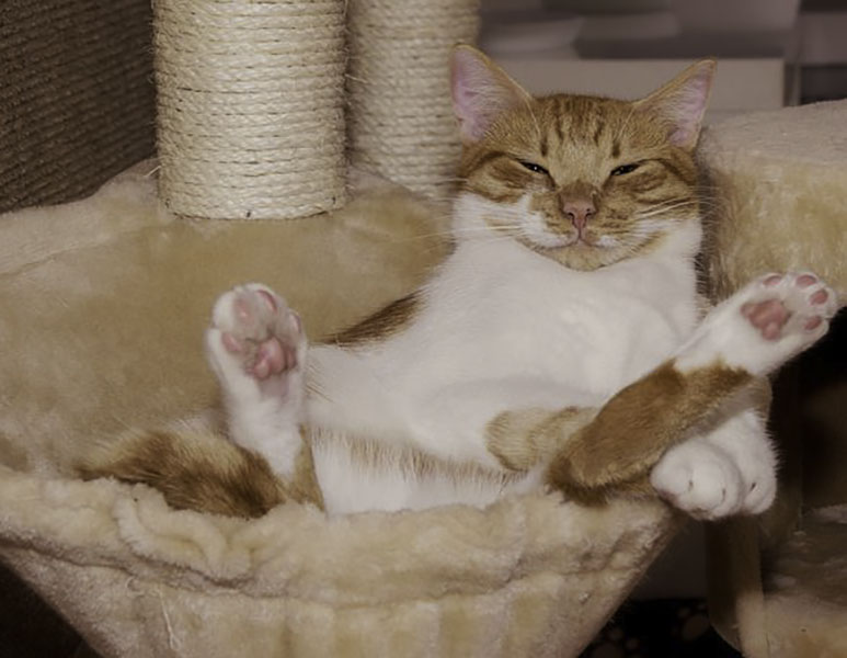 7 Life Lessons According To Your Cat - The Good Guide