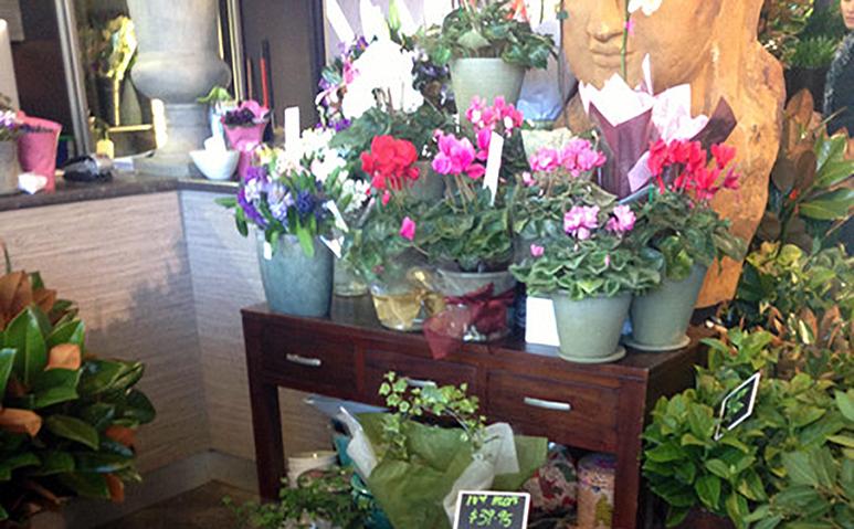 Flower_Trap_James_St_773_3.jpg