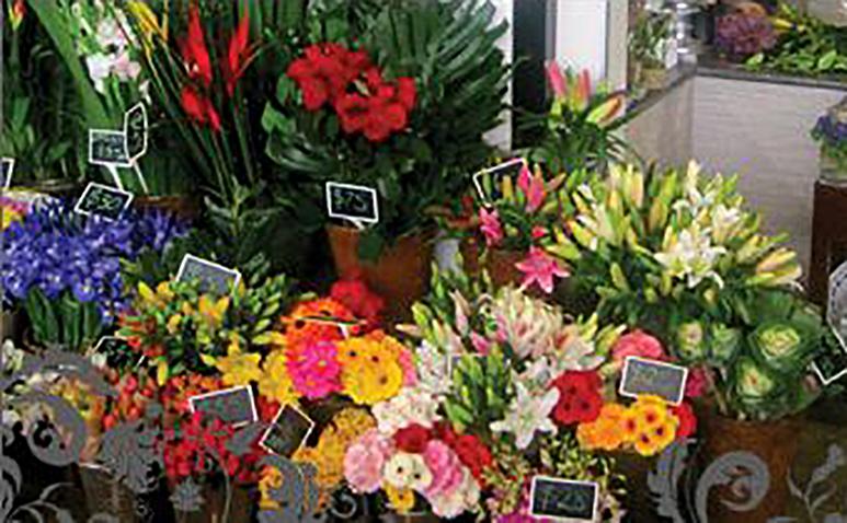 Flower_Trap_James_St_773_4.jpg